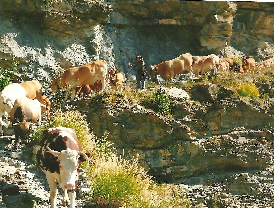 Sur le sentier escarpé dominant la gorge de Maillassore. (Ph.M.Hagard).