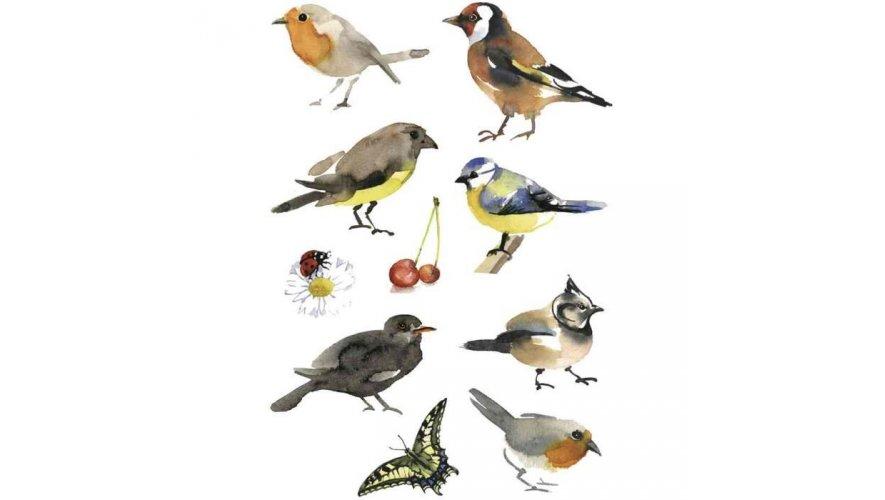 Plaquette oiseaux