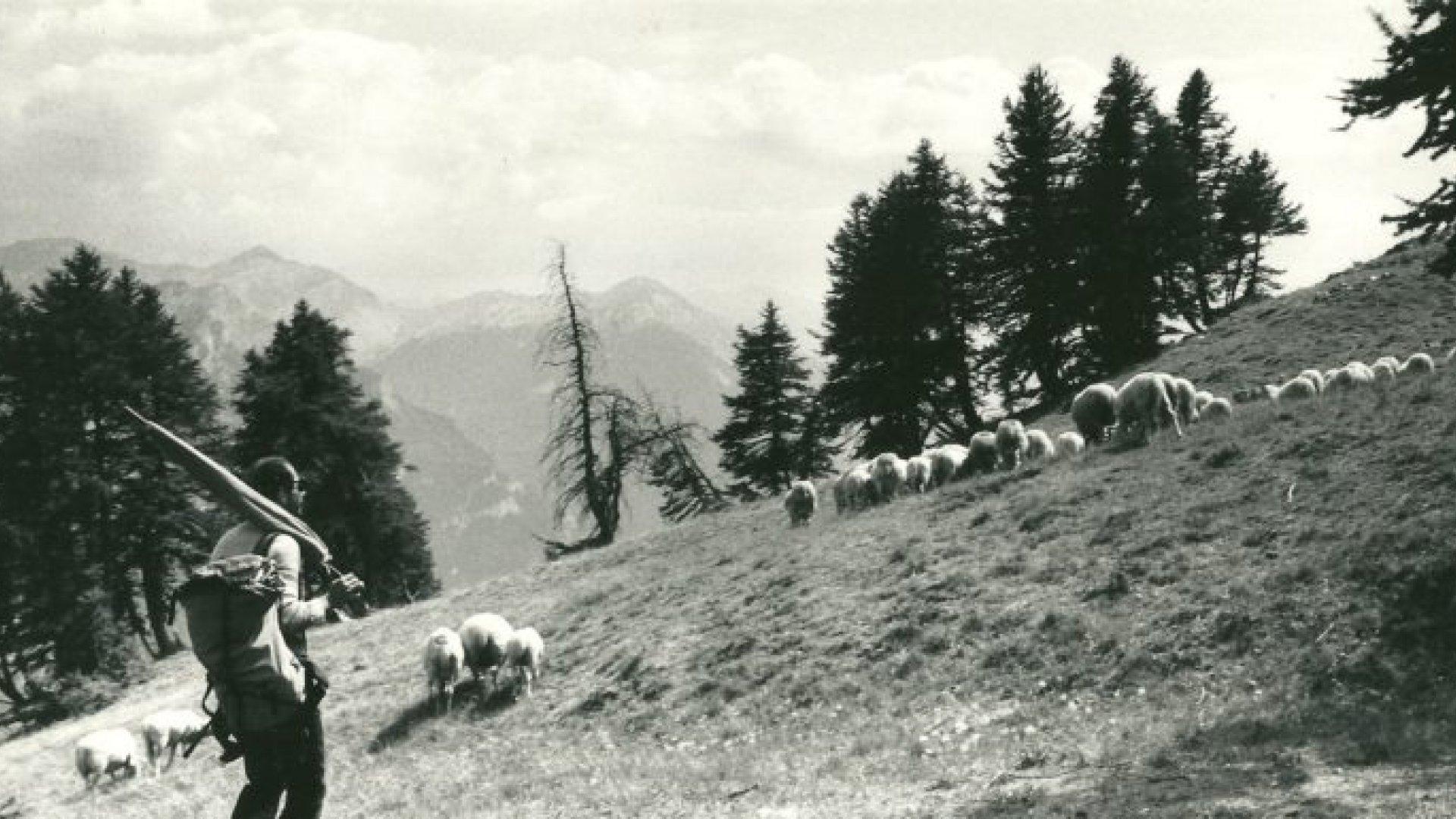 Bergers de l'Alp