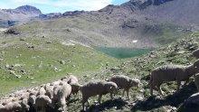 Photo N° 3 : Lac de Palluel.