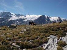 Photo N° 3 : Plateau d'Emparis. Rateau, glacier de la Girose.